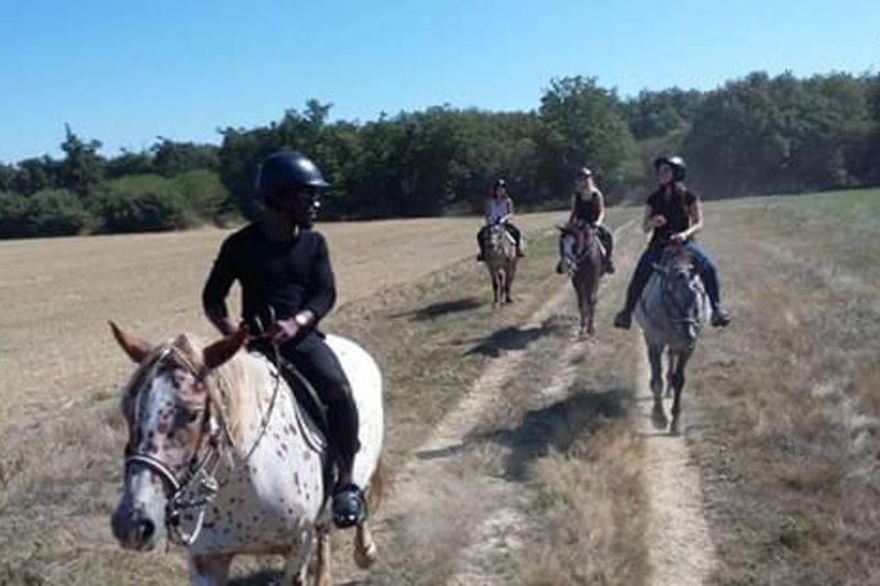 Balades à cheval niveau confirmé