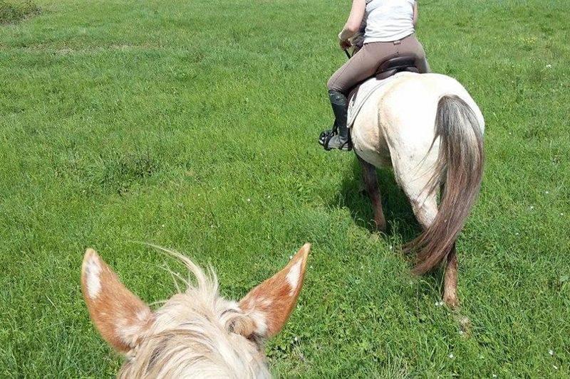 Activité cheval en période covid dès 10 ans