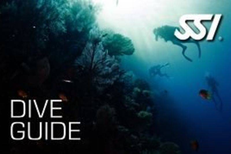 dive guide / dive master