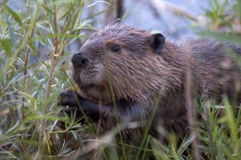 Sur les traces des castors à Anduze
