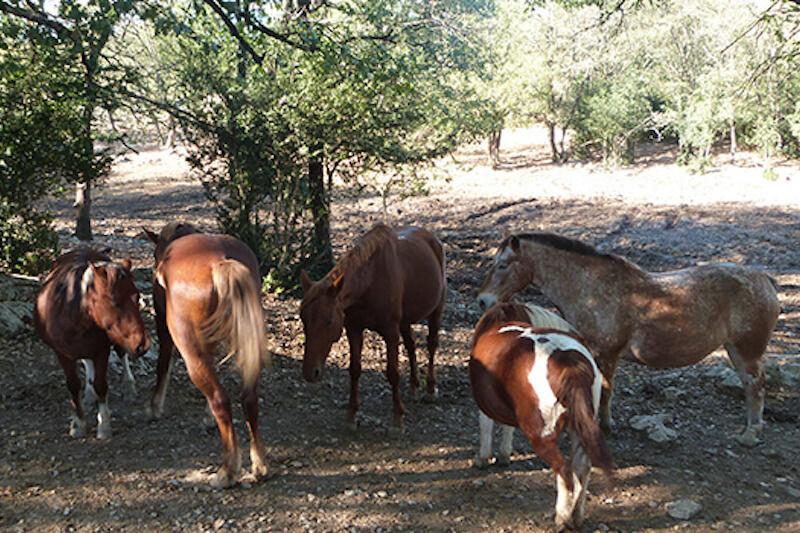 Demi pension pour chevaux