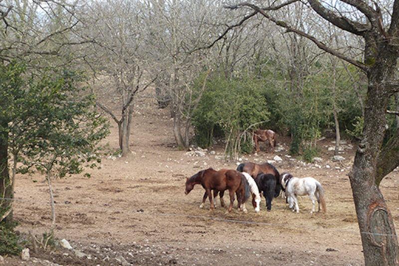 pension complète pour chevaux