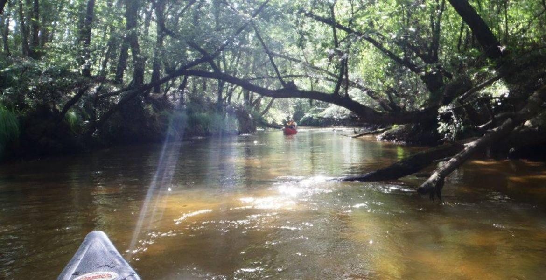 Descente demi journée guidée en canoë sur la Leyre