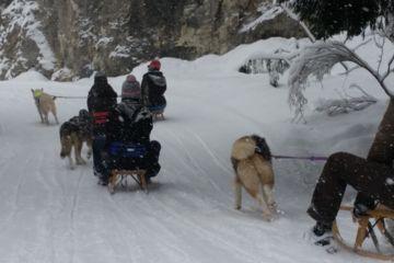 Cani luge : randonnée en luge tirée par un husky