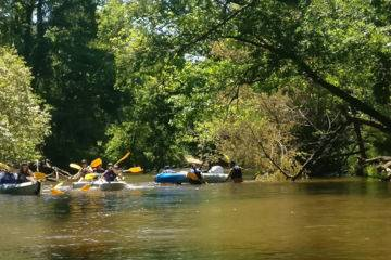 Half day canoe trip on leyre 6 km