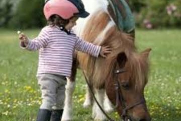 Bébé poney