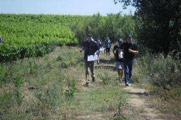 Rallye des vignes (tarn)