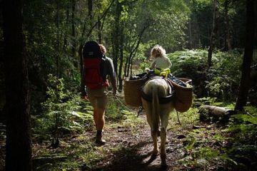 Ballade avec âne
