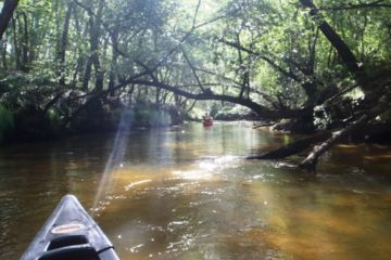 Half day guided canoe trip on leyre 6km or 14 km