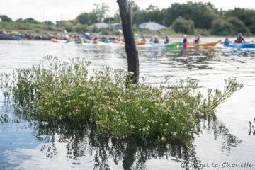 Balade en kayak dans les prés salés du bassin d'arcachon